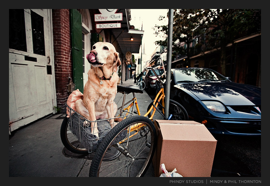 french_quarter_bike_dog